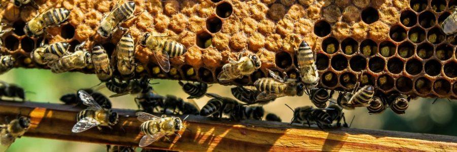 La cire d'abeille pour les meubles