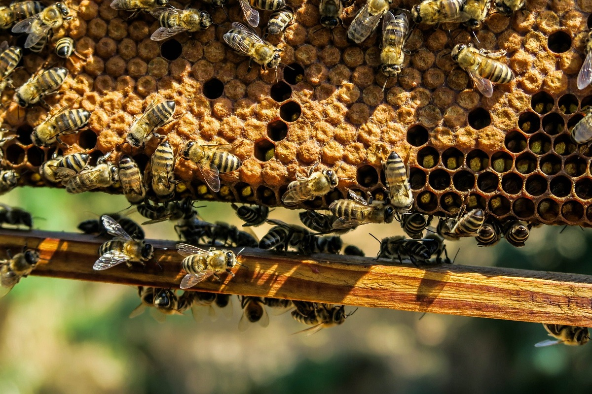 ruche-cire-abeilles